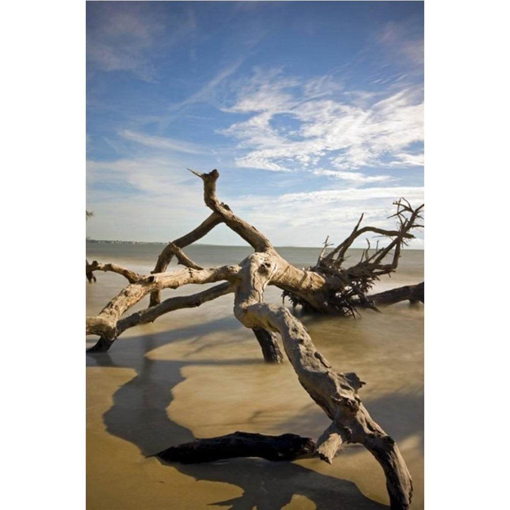 Twisted Limbo - Accessories - Canvas Art - Photograph