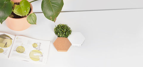 polygon light tiles with plant and cork and drawing sketch