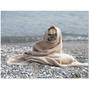 OPULENT DEZIGNZ™ Pug on Rocky Shores Inspirational Placemats
