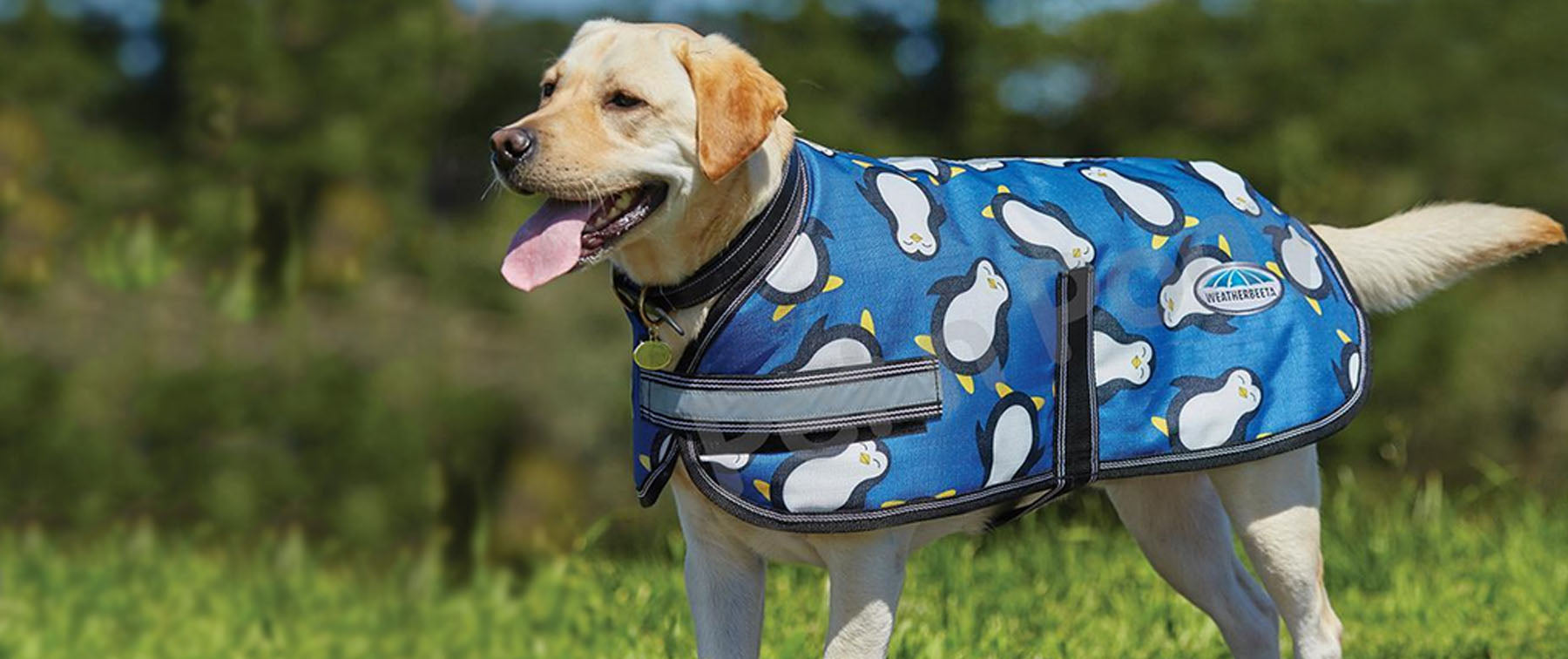Why Should I Buy a Dog Coat?