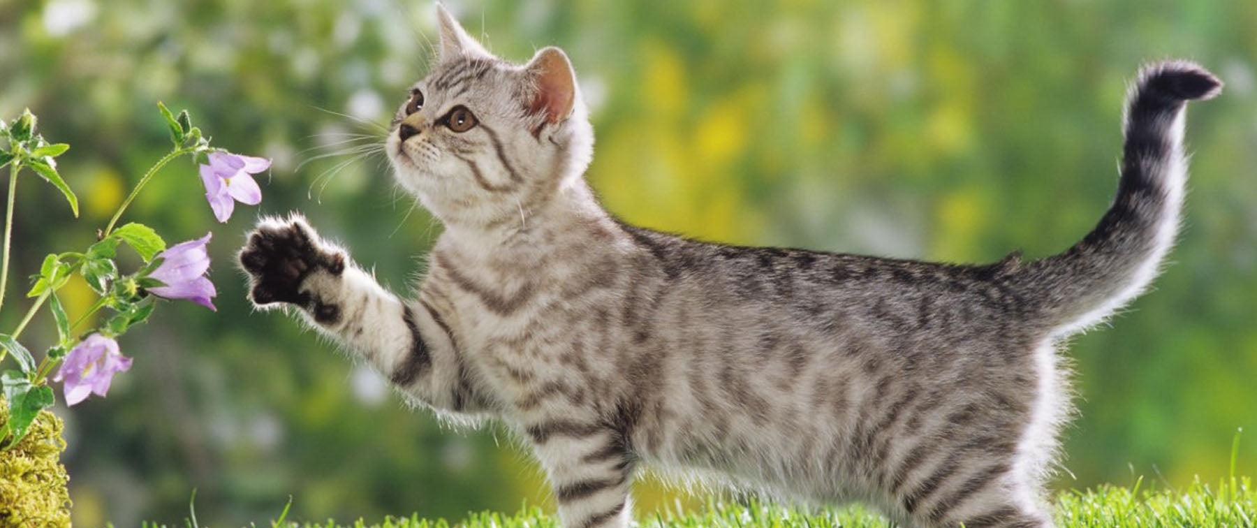 What Cat Breed is Right for Me?