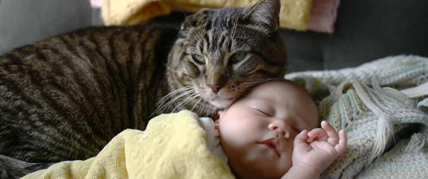 Cats may be preventing Asthma in children!
