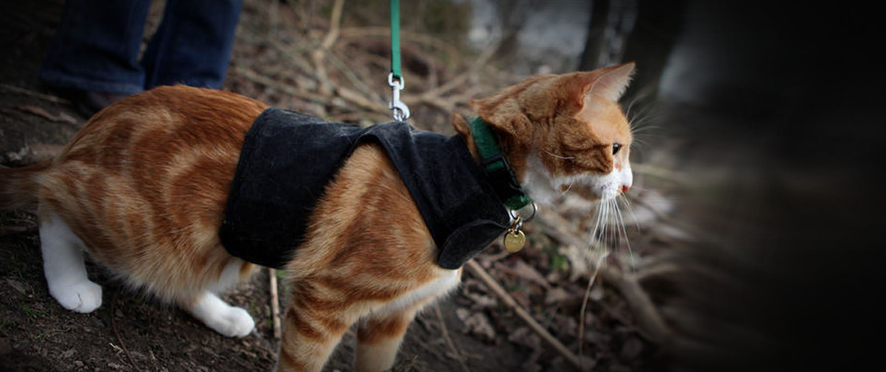 Walking your Cat is a bad thing? RSPCA says