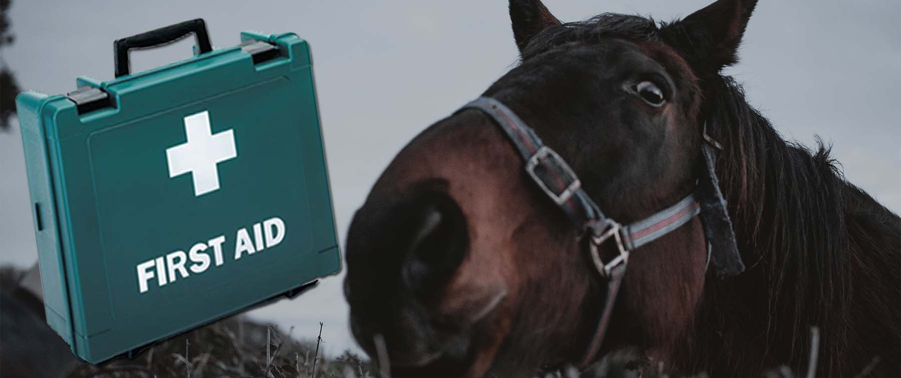 What's in my first aid box: Equine Edition
