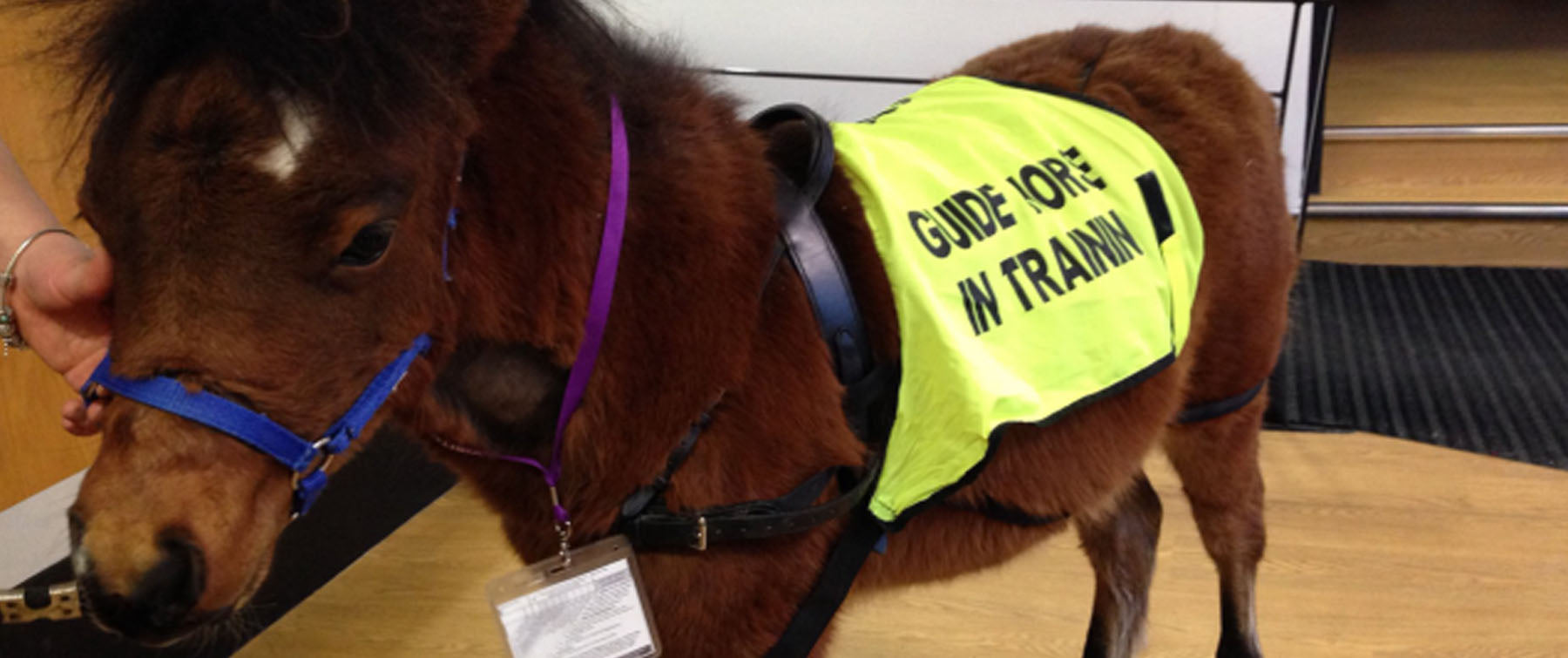 First 'guide horse' helps blind journalist