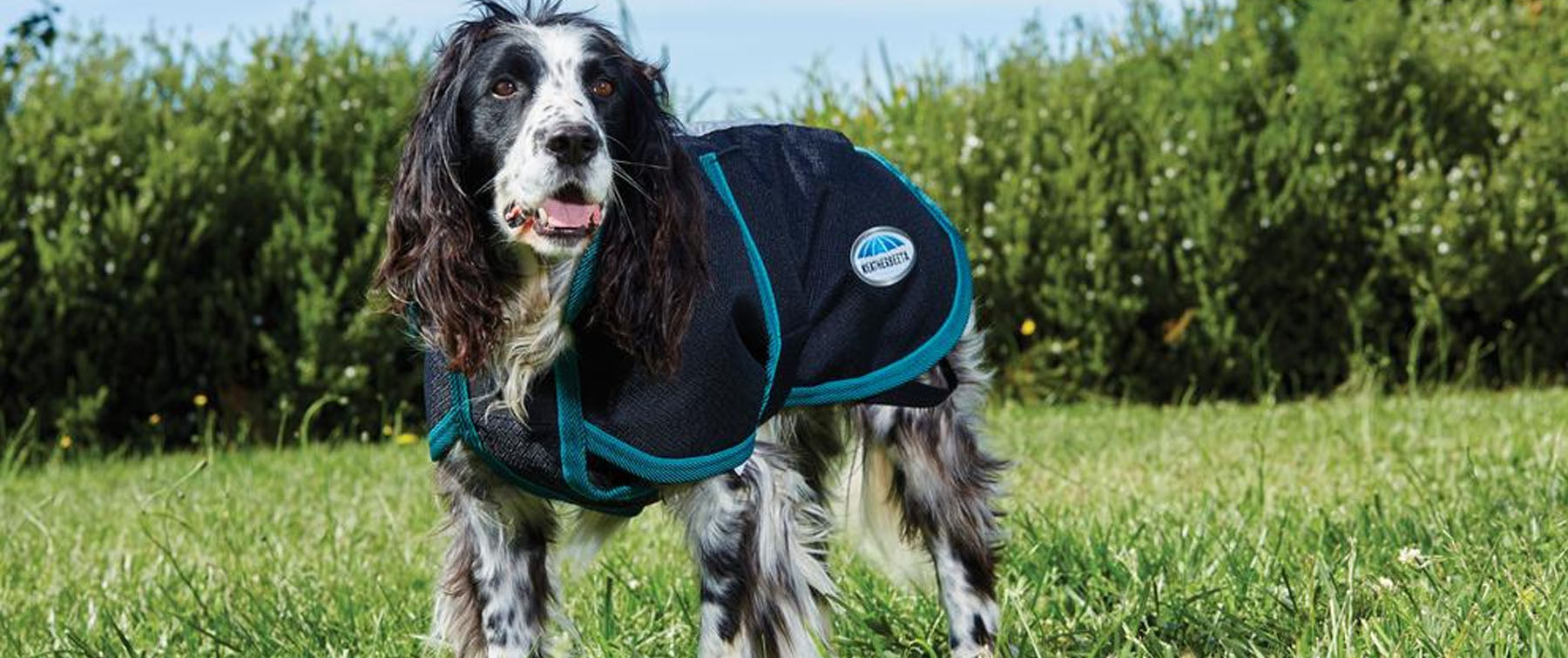 The Guide to Measuring Your Dog for a Coat