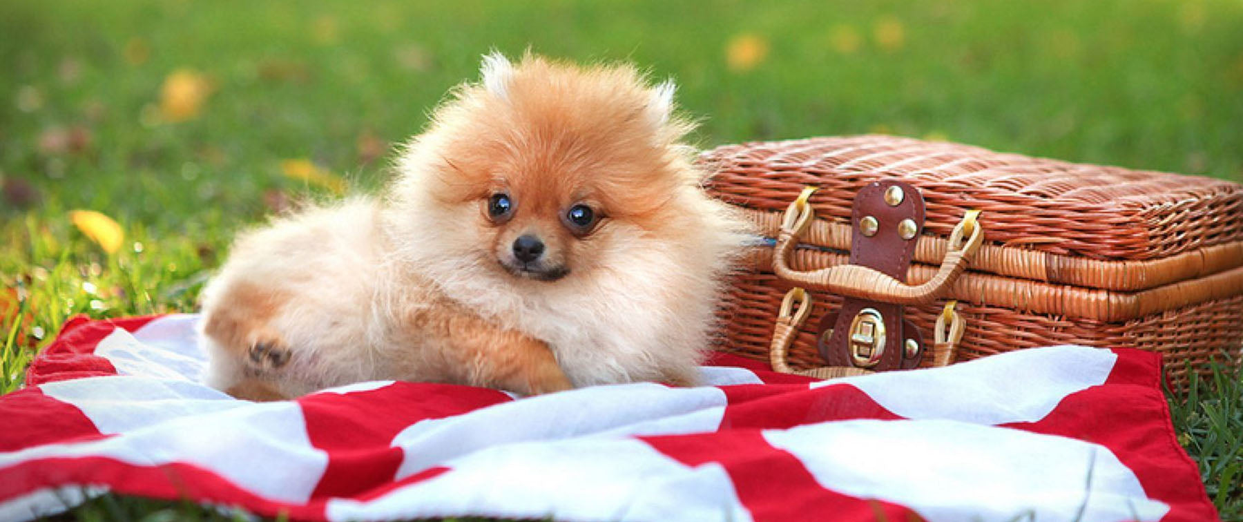Summer Picnic with the Dog? Woof Woof!