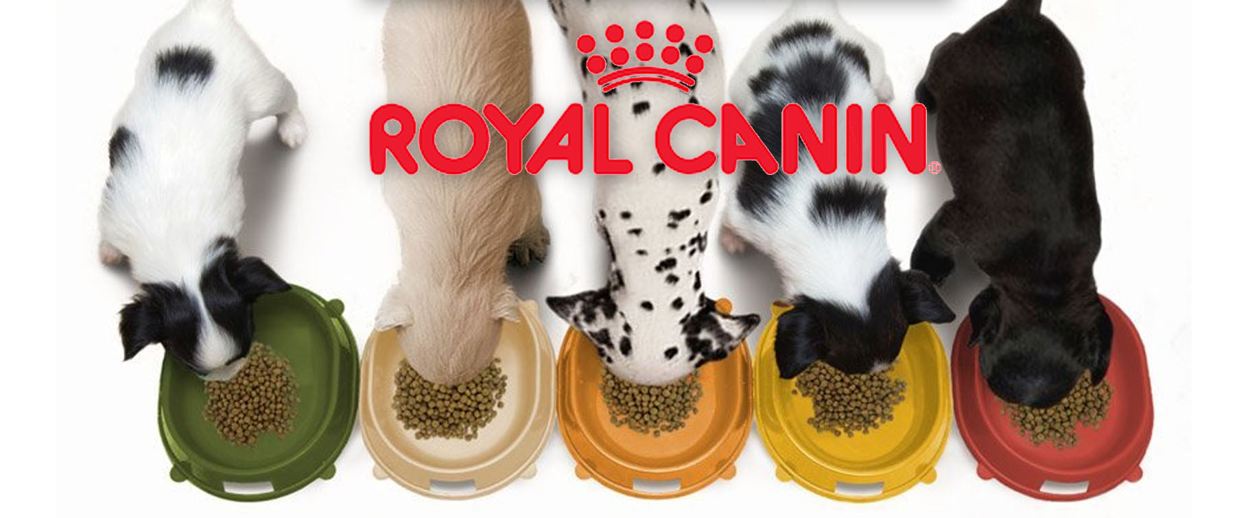 Royal Canin: How is it breed specific?