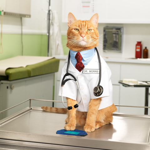 Cat Health & Hygiene