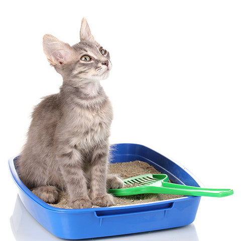 Cat Litters & Trays