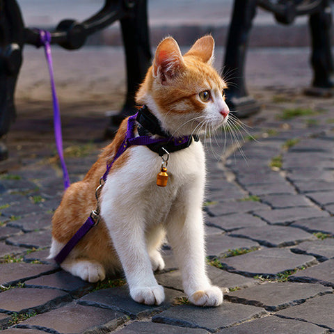 Cat Collars Lead & Harness