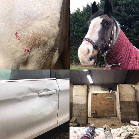 Dave and Meg horse injured by car