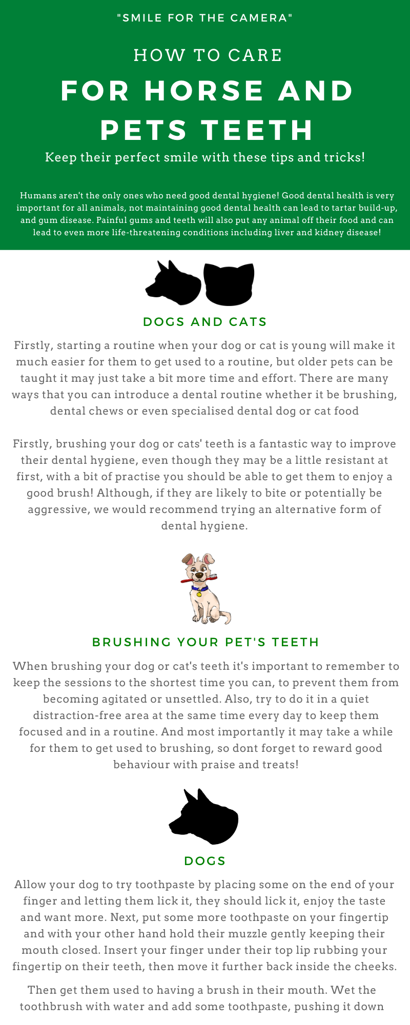 How to take care of your horses teeth