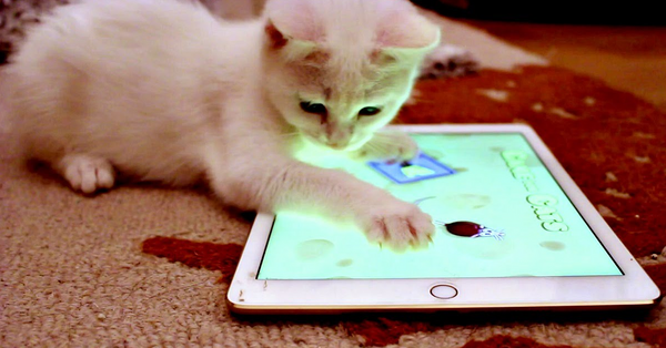 cat on an ipad