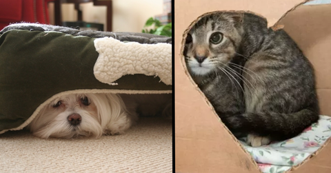 cat and dog hiding