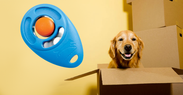 clicker and dog in  BOX