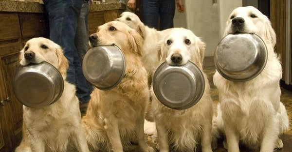 dogs holding food bowls