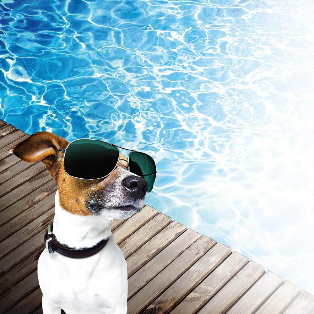 cool dogs this summer at PetnPony