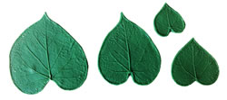 Morning Glory Leaf Stamp Set