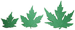 Maple Leaf Stamp Set