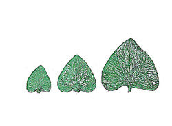 Violet Leaf Stamp Set