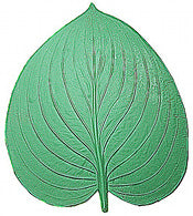 Water Lily Leaf Stamp Large