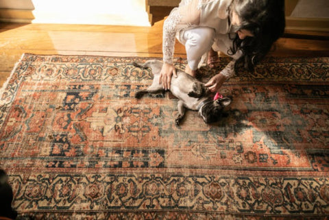 pet & carpet; tips on buying best rugs