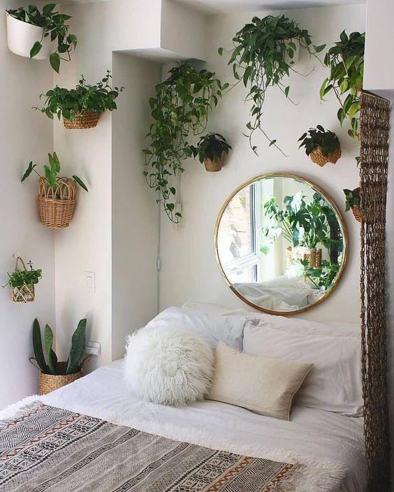 Plants in home decoration