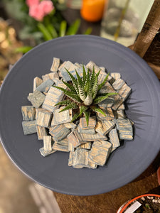 The Haworthia
