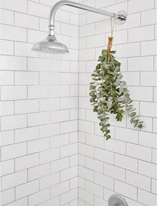 Eucalyptus Shower bunch