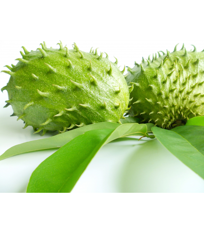 Soursop (Graviola) Leaf Powder - 100% Natural - Organic