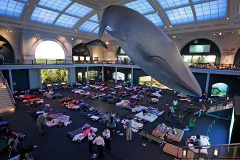 new york, museum of natural history, sleepover