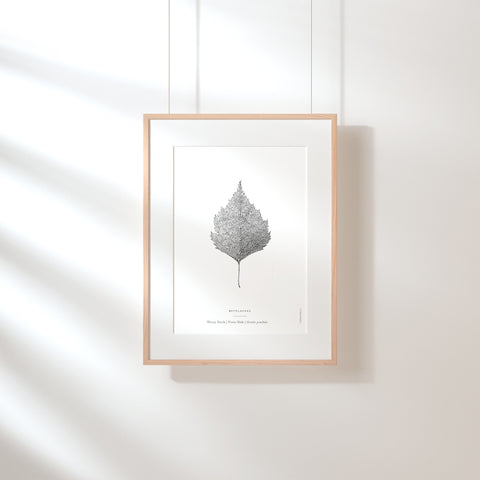 Warty Birch Leaf Art Print