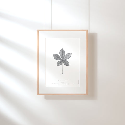 Horse Chestnut Leaf Art Print