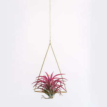 Triangle Air Planter - Darling Spring