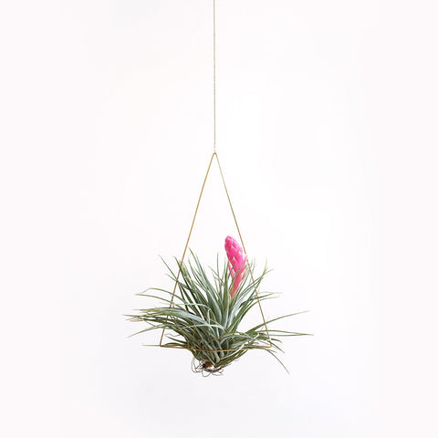 Triangle Air Planter Set