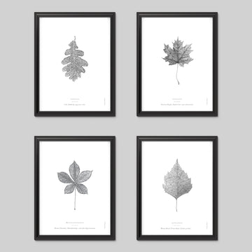 Nature Art Print Set - Darling Spring