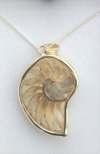 SP115 - SILVER OUTLINE SHELL PENDANT - STUNNING