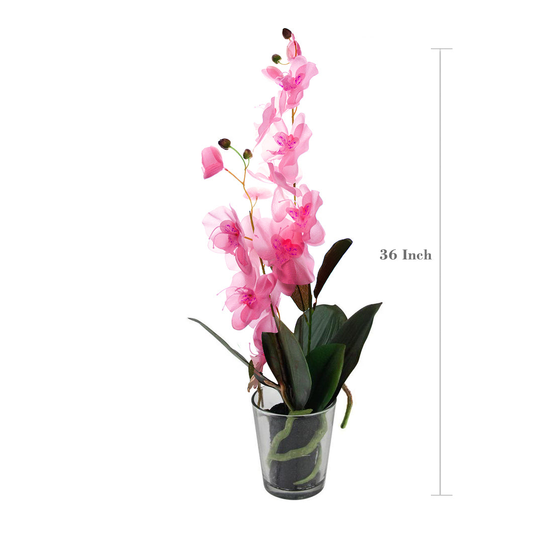 Artificial Flower Silk Phalaenopsis Orchid 36 Inch Pack of 6