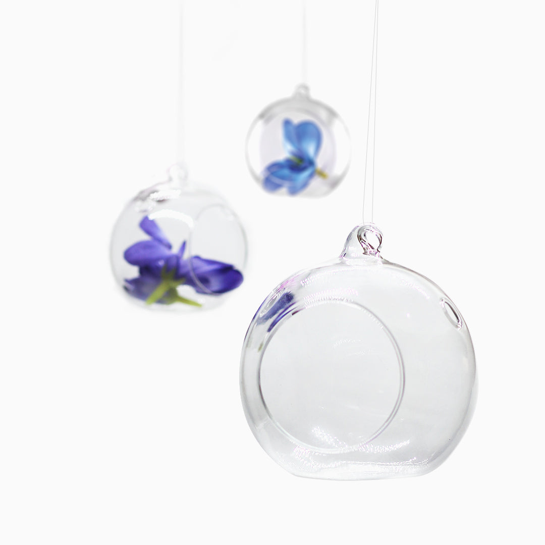 Hanging Glass Globe Candle Holder Air Plant Terrarium Pack of 6