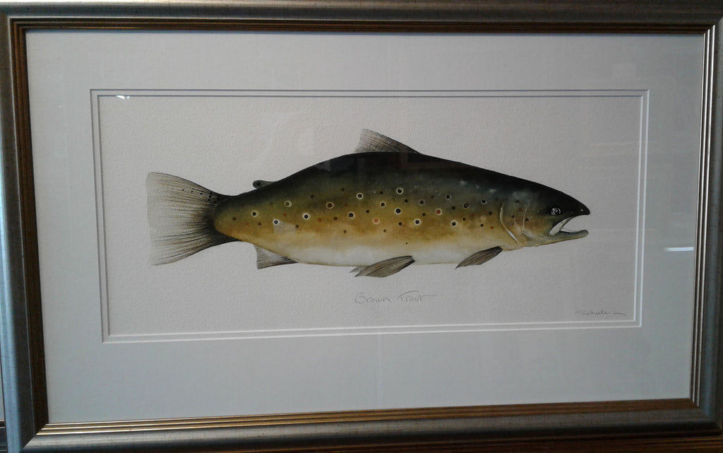 Michael Scheele-Brown Trout