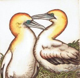 Mary Taylor- Gannets