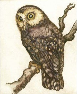 Mary Taylor-Morepork