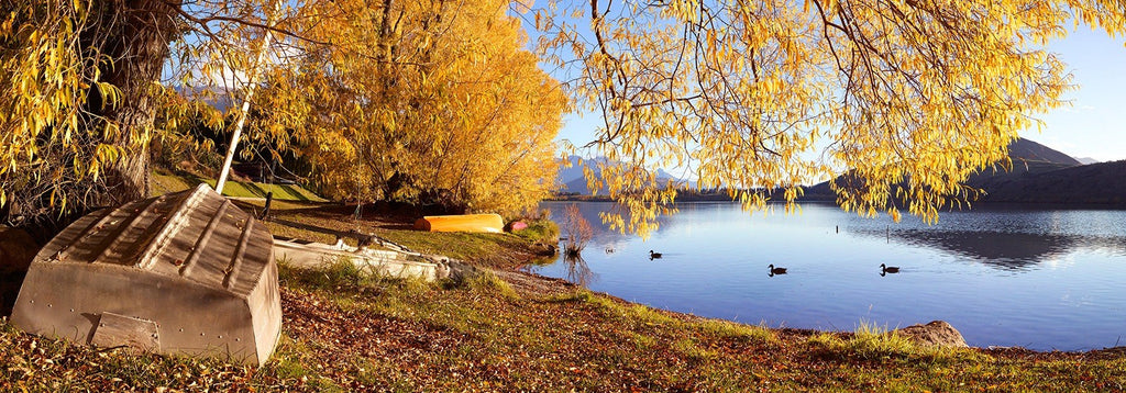 Peter Latham- Autumn Splendor