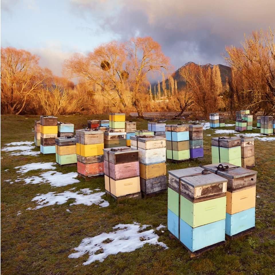Peter Latham-Golden Beehives