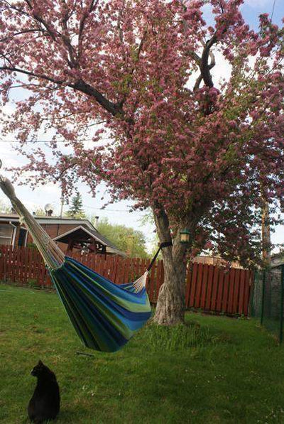 Hammock Set Up using Tree Straps