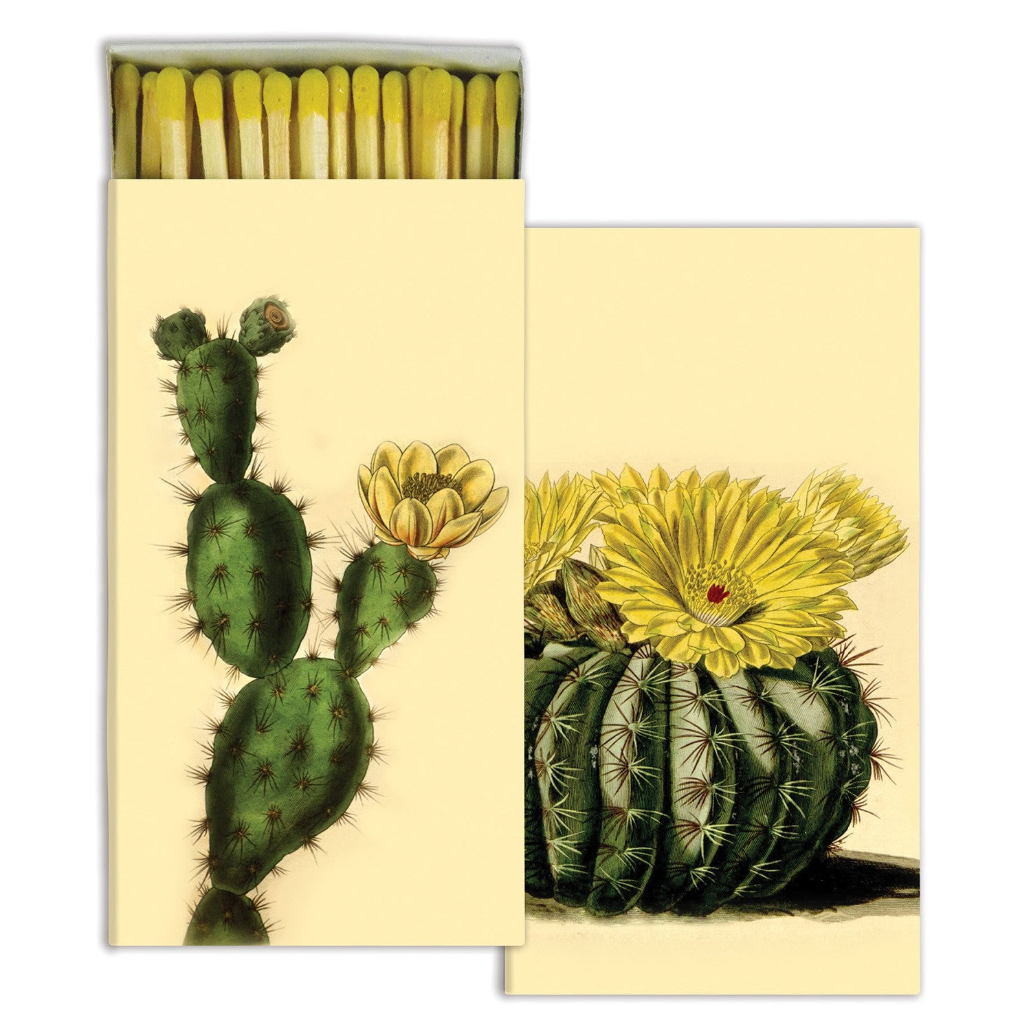 Matches - Cacti - CARLYLE AVENUE