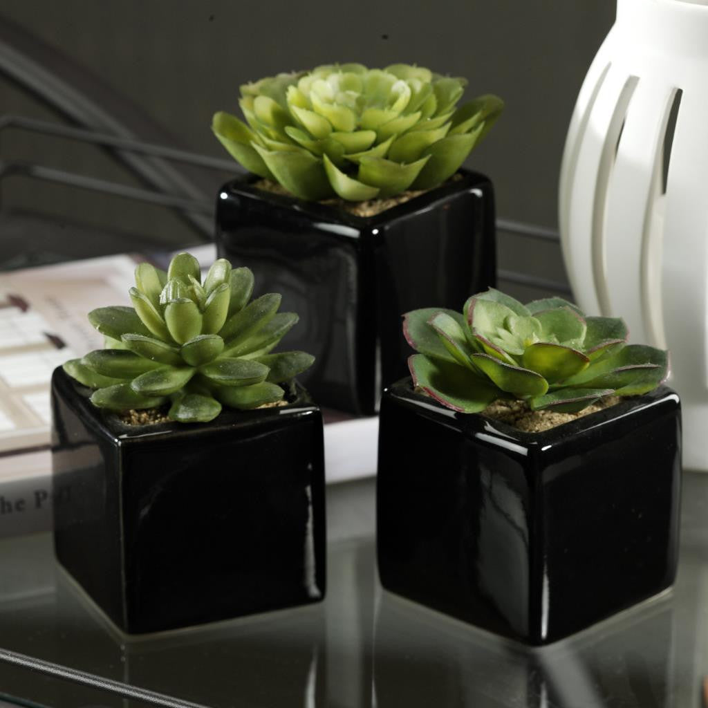 Assorted Desert Succulents in Ceramic Container - Set of 6 - Default Title - CARLYLE AVENUE - 2