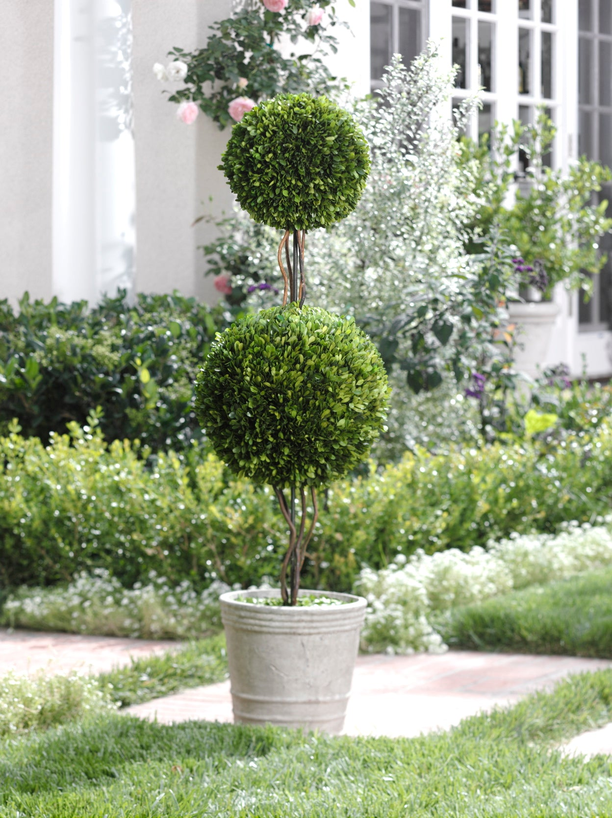 Double Ball Boxwood Topiary - CARLYLE AVENUE