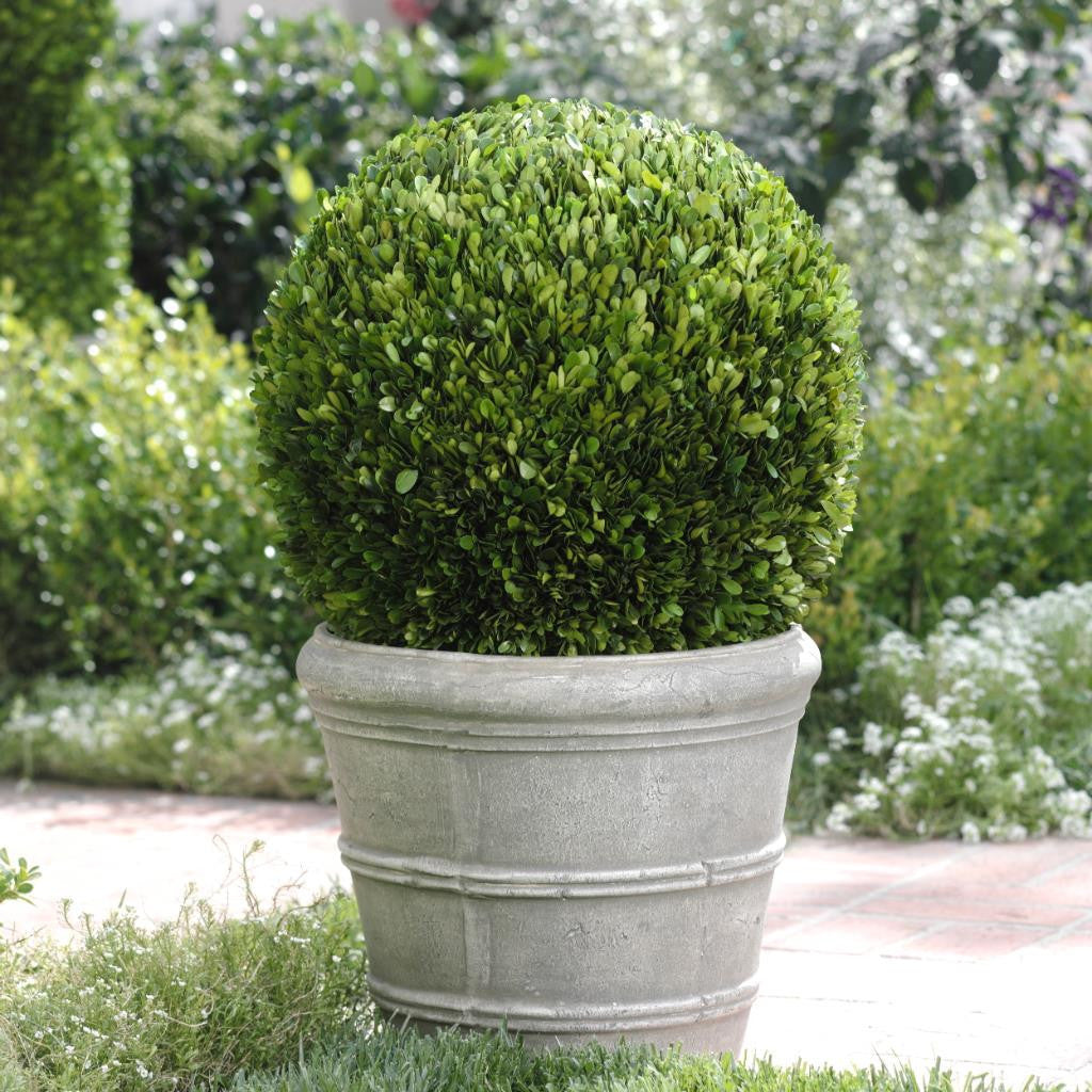 Single Ball Boxwood Topiary - Default Title - CARLYLE AVENUE